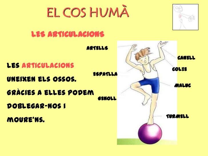EL COS HUMÀ      LES ARTICULACIONS                     ARTELLS                                     CANELLLes articulacions...