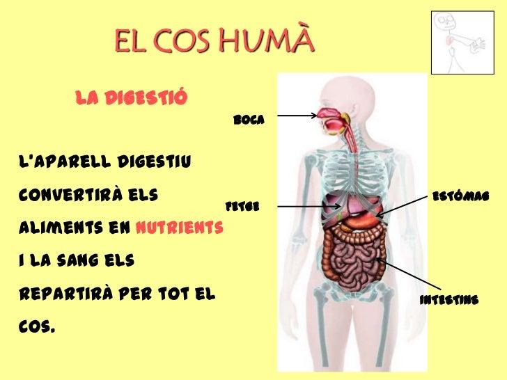 EL COS HUMÀ       LA DIGESTIÓ                         BOCAL'aparell digestiuconvertirà els                   ESTÓMAG      ...