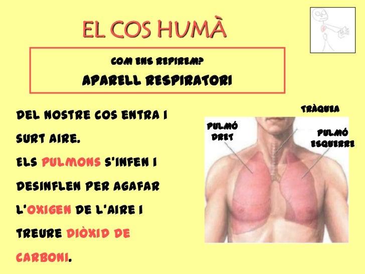 EL COS HUMÀ                COM ENS REPIREM?             APARELL RESPIRATORI                                           TRÀQ...