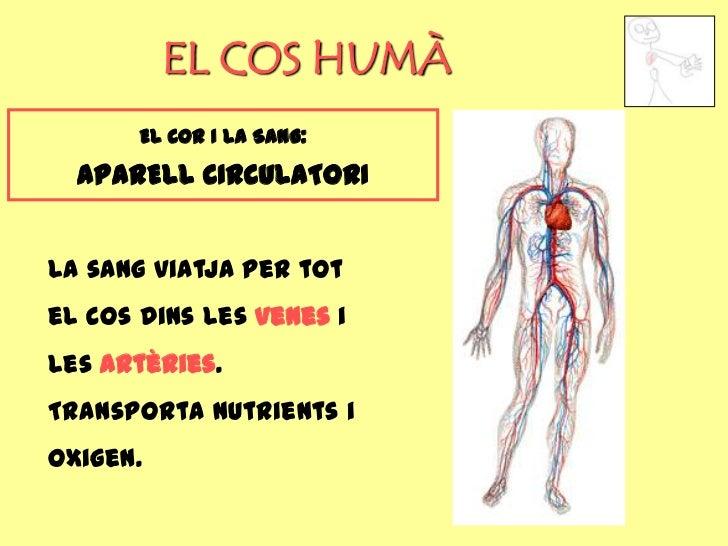 EL COS HUMÀ       EL COR I LA SANG:  APARELL CIRCULATORILa sang viatja per totel cos dins les venes iles artèries.Transpor...