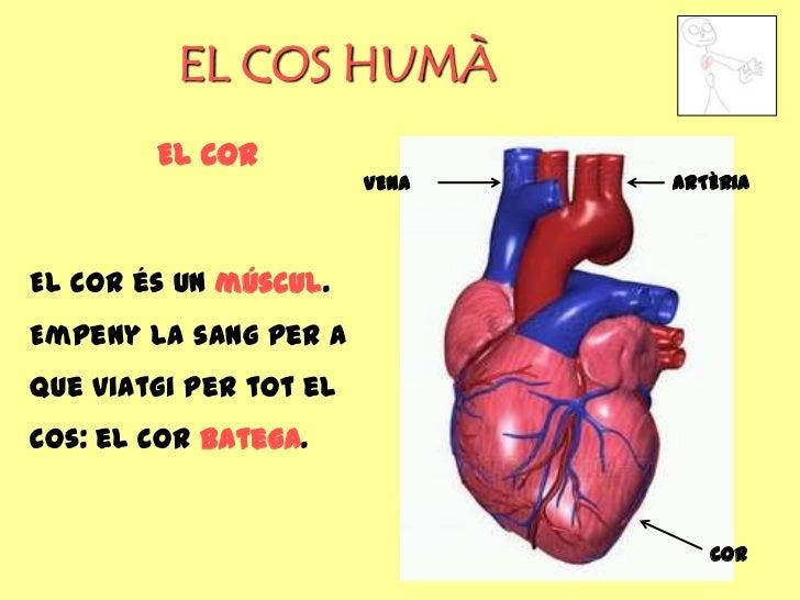 EL COS HUMÀ        EL COR                        VENA   ARTÈRIAEl cor és un múscul.Empeny la sang per aque viatgi per tot ...