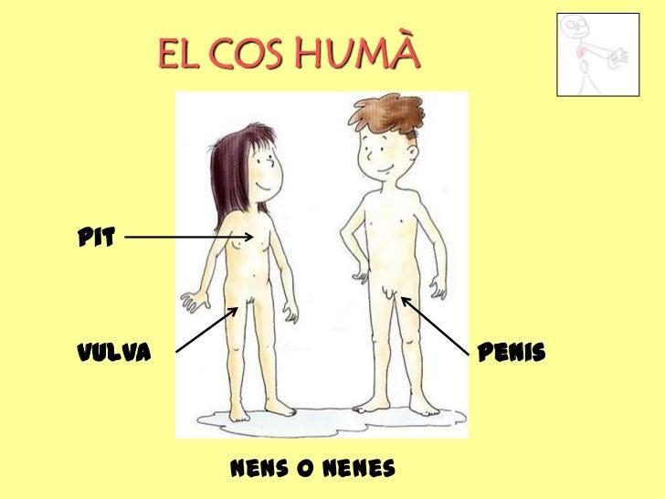 EL COS HUMÀpitvulva                     penis           Nens o nenes