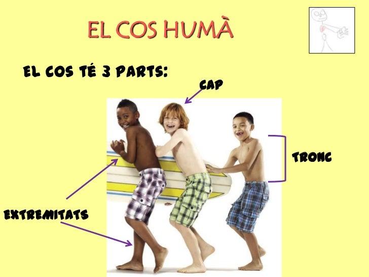 EL COS HUMÀ  El cos té 3 parts:                       CAP                             TRONCEXTREMITATS