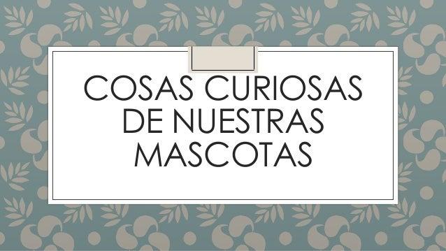 COSAS CURIOSAS  DE NUESTRAS  MASCOTAS