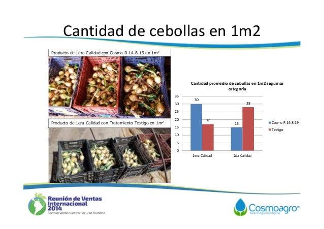 Aporte de cosmo r en el cultivo de cebolla - 1m2 en cm ...