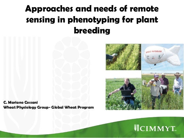 Approaches and needs of remote sensing in phenotyping for plant breeding  C. Mariano Cossani Wheat Physiology Group- Globa...
