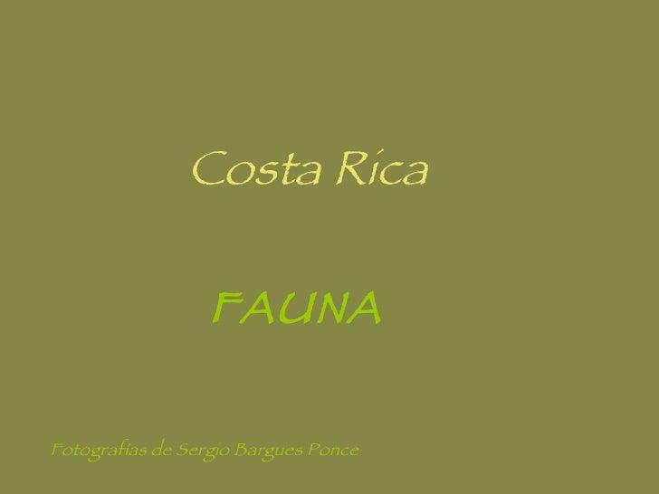 Costa Rica FAUNA Fotografías de Sergio Bargues Ponce