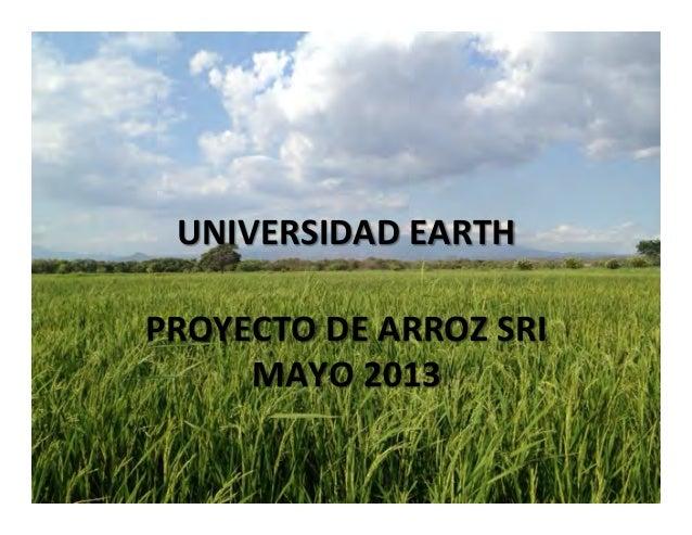 UNIVERSIDAD  EARTH     PROYECTO  DE  ARROZ  SRI   MAYO  2013