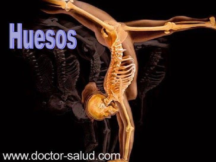 El hueso es un órgano firme, duro y resistente queforma parte del endoesqueleto de los vertebrados.Está compuesto por teji...