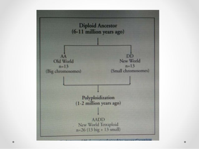 anthesis bangalore Anthesis technologies pvt ltd bangalore  .