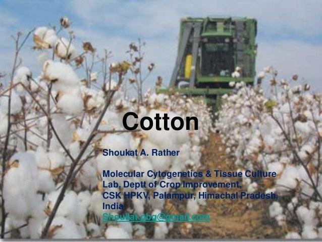 CottonShoukat A. RatherMolecular Cytogenetics & Tissue CultureLab, Deptt of Crop Improvement,CSK HPKV, Palampur, Himachal ...