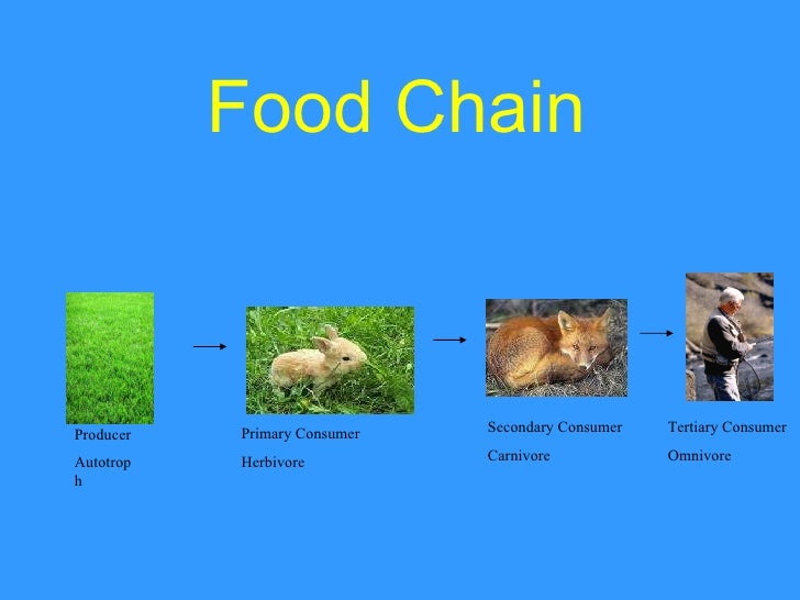 What Does A Fly Eat In A Food Chain