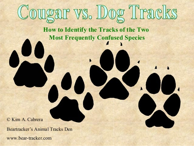 How to Identify the Tracks of the Two Most Frequently Confused Species © Kim A. Cabrera Beartracker's Animal Tracks Den ww...