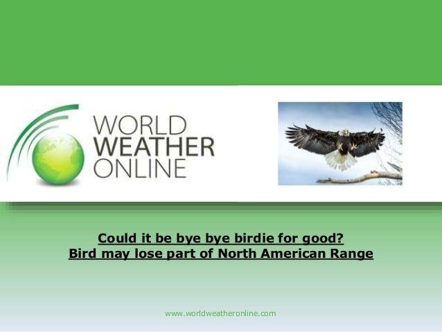 www.worldweatheronline.com Could it be bye bye birdie for good? Bird may lose part of North American Range