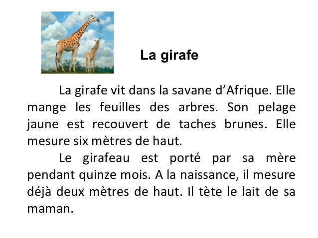 La girafe     La girafe vit dans la savane d'Afrique. Ellemange les feuilles des arbres. Son pelagejaune est recouvert de ...