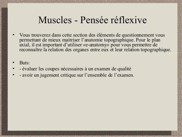 Muscles - Pensée réflexive • Vous trouverez dans cette section des éléments de questionnement vous permettant de mieux mai...