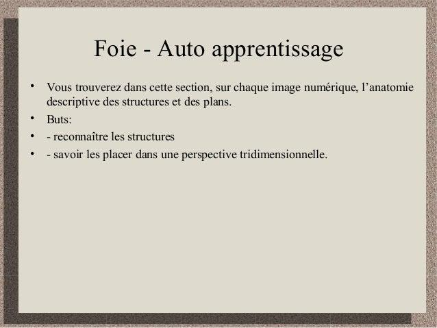 Foie - Auto apprentissage • Vous trouverez dans cette section, sur chaque image numérique, l'anatomie descriptive des stru...
