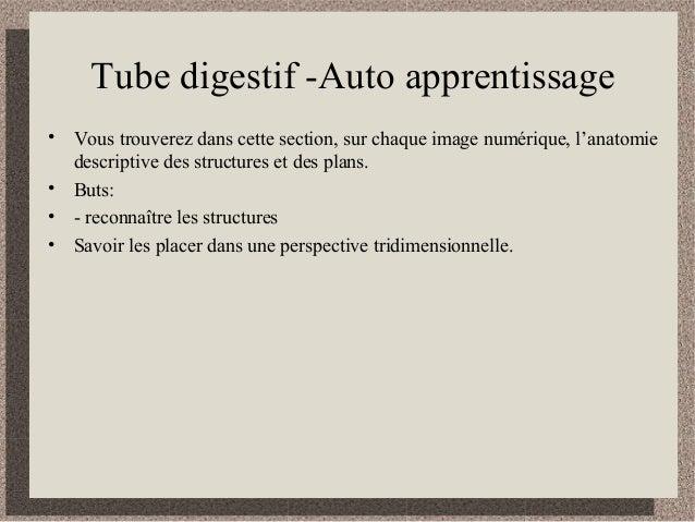 Tube digestif -Auto apprentissage • Vous trouverez dans cette section, sur chaque image numérique, l'anatomie descriptive ...