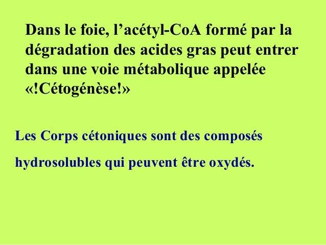 Dans le foie, l'acétyl-CoA formé par ladégradation des acides gras peut entrerdans une voie métabolique appelée«!Cétogénès...