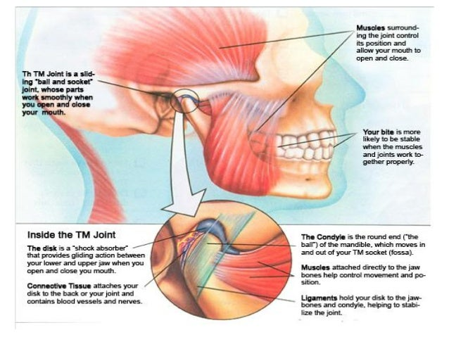 Tmj Jaw Bone Diagram - House Wiring Diagram Symbols •