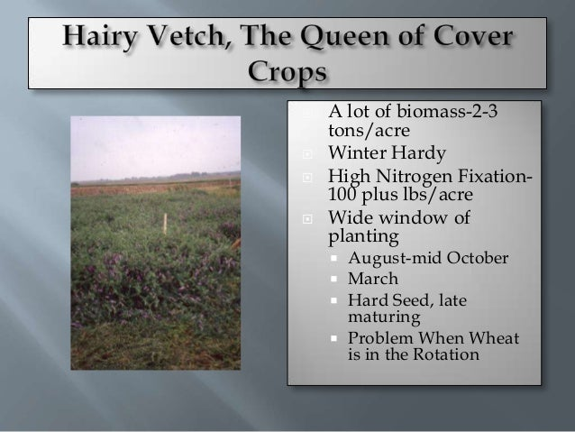    Adapted from Gallagher, Penn State          2007          Hairy Vetch                   Corn Yield-0 N      Time      ...