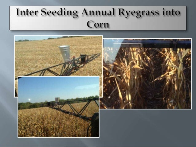 May           Corn           Grain SorghumMissouri 1997-1999Cover Crop     Cover Crop    Fertilizer N   Fertilizer NCover ...
