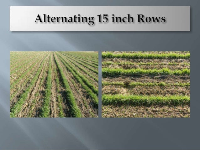    Better Water    Infiltration   Nutrient Cycling   Root Development
