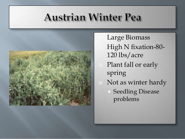    Plant August-    September   Early spring maturity   Not as much biomass    as Hairy Vetch or Peas   Can reseed    ...