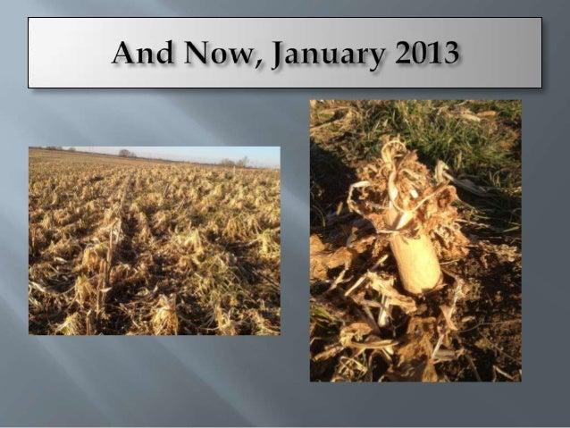    Corn/Soybean       Corn/rye/Soybean/radish+oats       Corn/rye+legume/Soybean/polyculture including        legumes ...