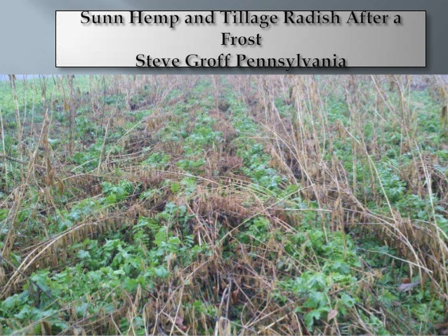 Cover Crops in Missouri