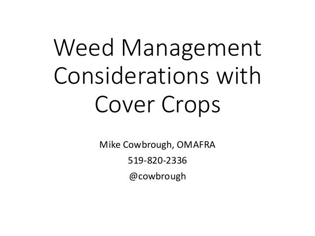 Weed Management Considerations with Cover Crops Mike Cowbrough, OMAFRA 519-820-2336 @cowbrough