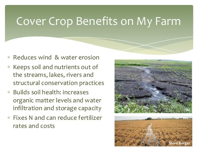 crop cover essay You are here: home / cover crops / about cover crops cover crops: cover crops are grasses, legumes, and other forbs that are planted for erosion control, improving soil structure, moisture, and nutrient content, increasing beneficial soil biota, suppressing weeds, providing habitat for beneficial predatory insects, facilitating crop pollinators.