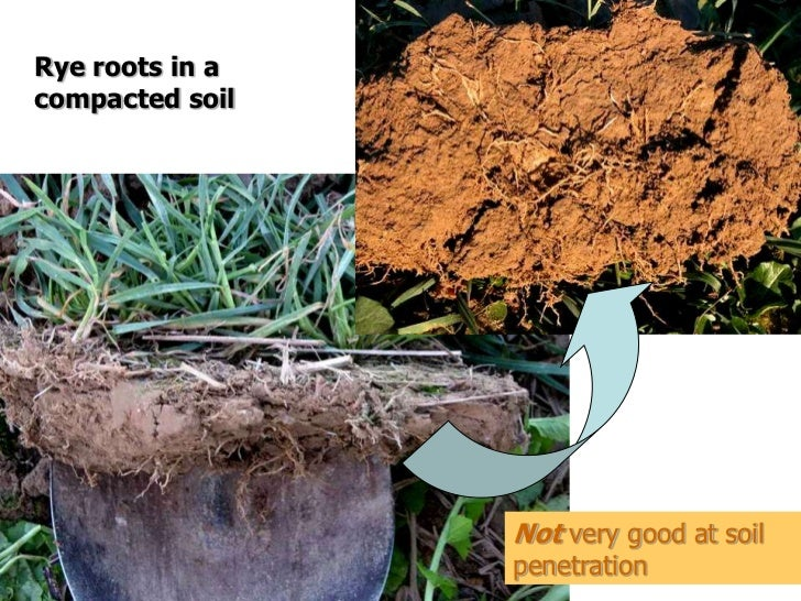 Cover crops soil compaction for Soil compaction