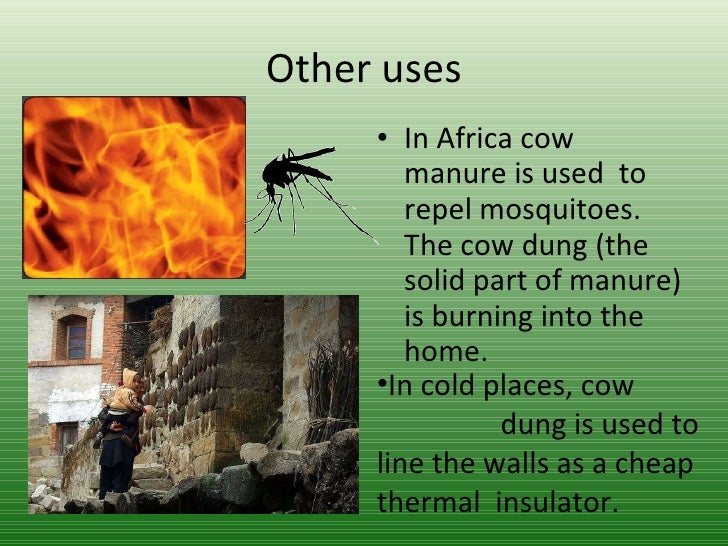 effects of cowdung and poultry manure To examine the effect of organic manure such as cow dung, poultry waste,   poultry manure performed better than other treatments, therefore,.
