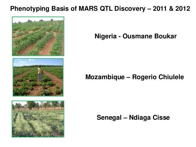 Phenotyping Basis of MARS QTL Discovery – 2011 & 2012 Nigeria - Ousmane Boukar Mozambique – Rogerio Chiulele Senegal – Ndi...