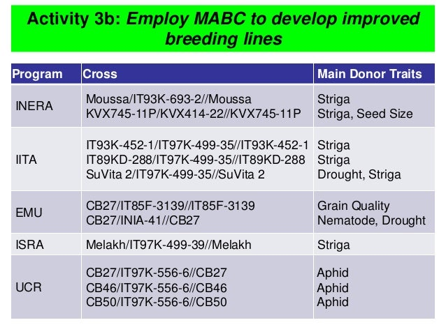Activity 3b: Employ MABC to develop improved breeding lines Program Cross Main Donor Traits INERA Moussa/IT93K-693-2//Mous...