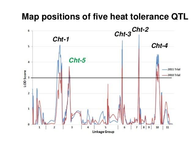 Map positions of five heat tolerance QTL Cht-1 Cht-2 Cht-3 Cht-4 Cht-5