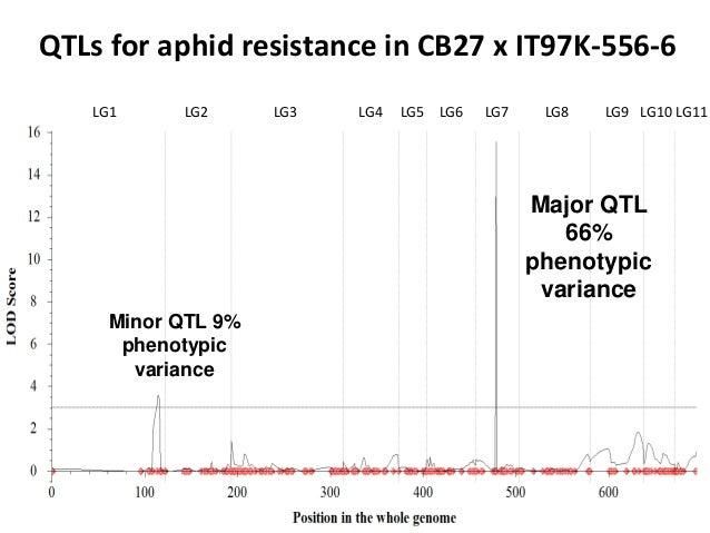 QTLs for aphid resistance in CB27 x IT97K-556-6 LG1 LG2 LG3 LG4 LG5 LG6 LG7 LG8 LG9 LG10 LG11 Major QTL 66% phenotypic var...