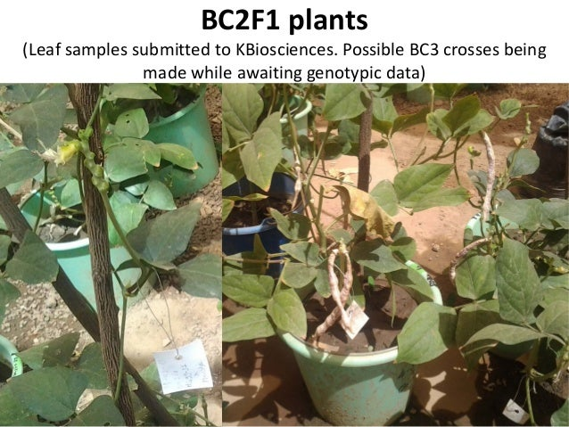 3d. QTL Discovery in Elite RILs Heat Tolerance – CB27 x IT82E-18 – Yield, yield components – Phenotyped Summers 2010 & 201...