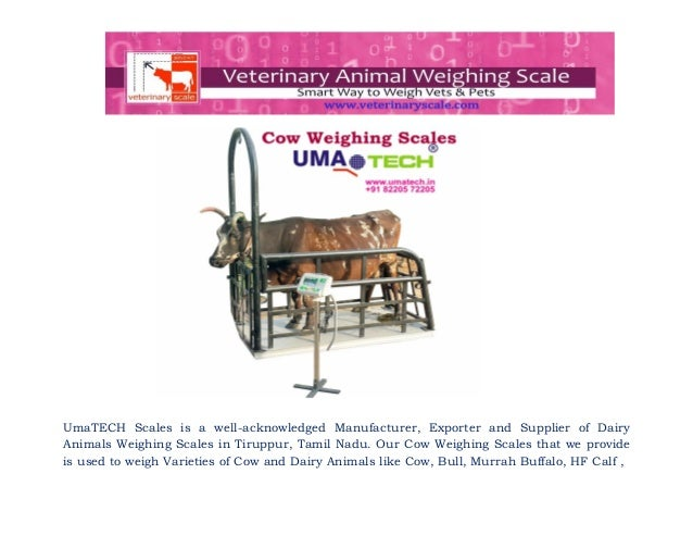 Cow weighing scales for cow farms, dairy farms and cattle