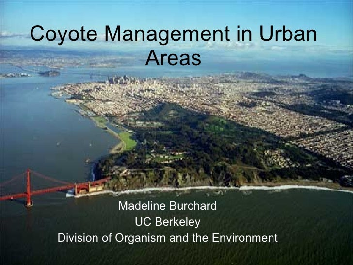 Coyote Management in Urban Areas Madeline Burchard UC Berkeley Division of Organism and the Environment
