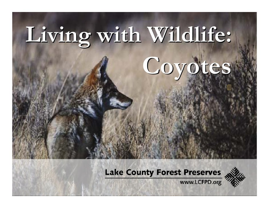 Living with Wildlife:            Coyotes