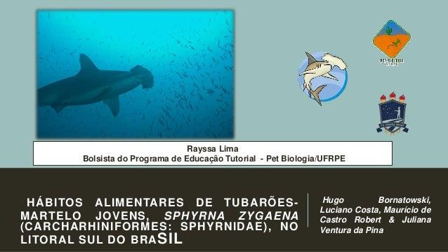 Rayssa Lima Bolsista do Programa de Educação Tutorial - Pet Biologia/UFRPE  HÁBITOS ALIMENTARES DE TUBARÕESMARTELO JOVENS,...