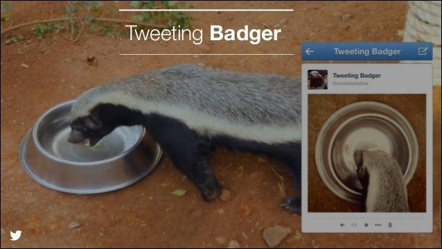 Tweeting Badger  @TwitterAds | Confidential