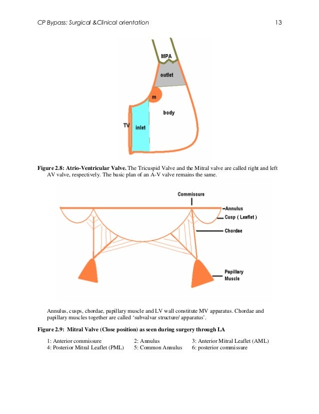 CP Bypass: Surgical &Clinical orientation                                                            13Figure 2.8: Atrio-V...