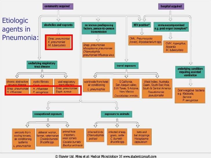 pathology of pneumonia