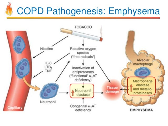 Pathology of COPD
