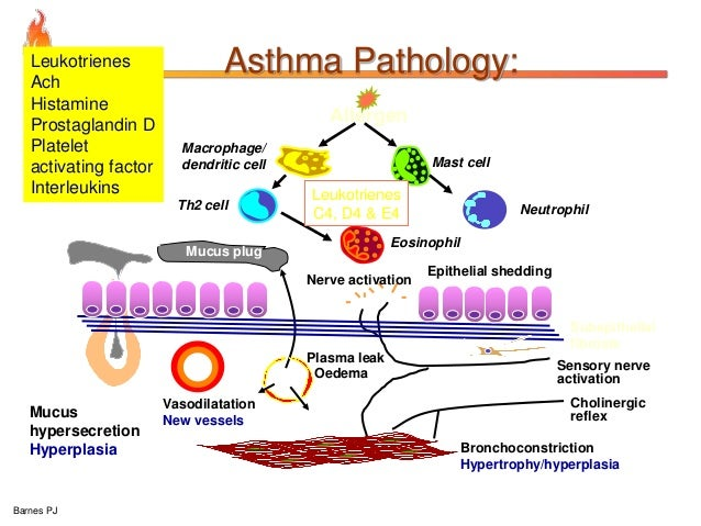 Pathology Of Copd