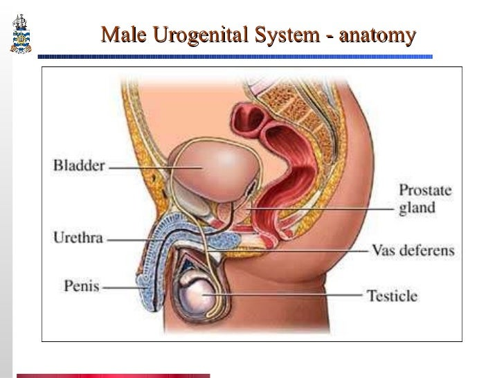 Pathology of Prostate