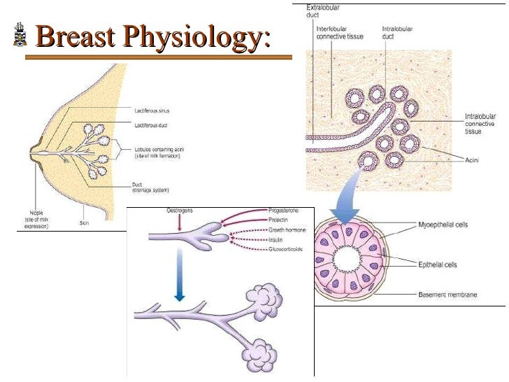 Pathology of Breast Disorders